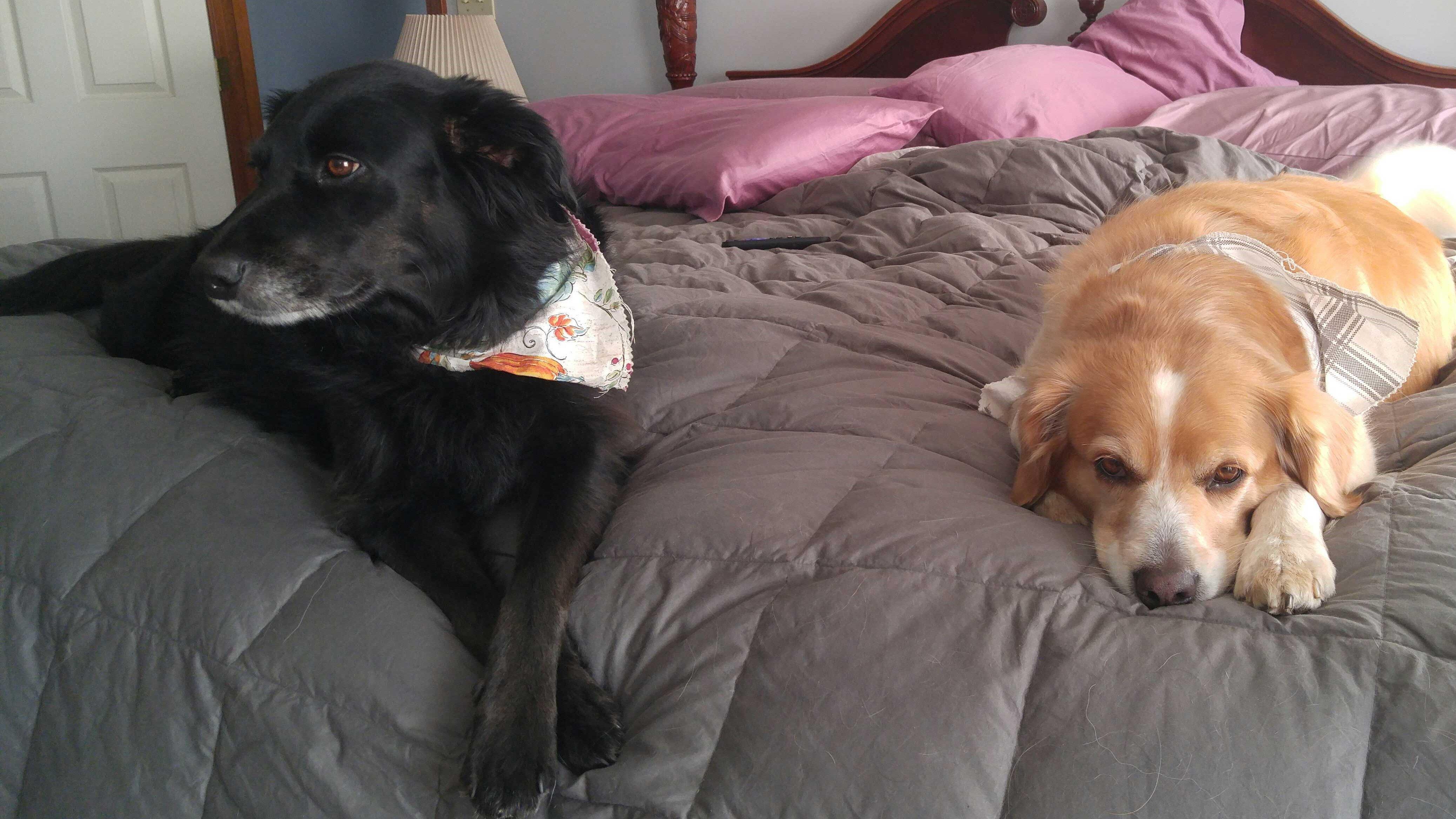 Shelby & Daisy
